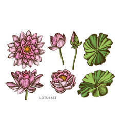 collection of hand drawn colored lotus vector image
