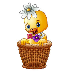 Cute baby duck inside a wicker basket with colorfu vector