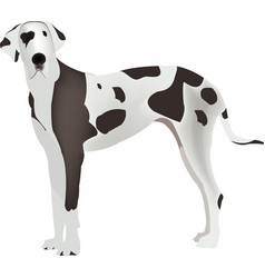 Dog great size great great great great vector