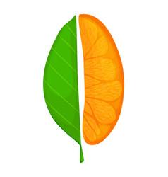 Fresh ripe orange piece fruit with leaves vector