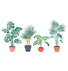 tropical house plants decor vector image