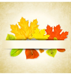 Autumn leaves on scratched paper background vector image