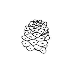 hand drawn cactus monadenium ritchieii liner vector image