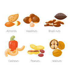 piles of different nuts hazelnut almond peanut vector image