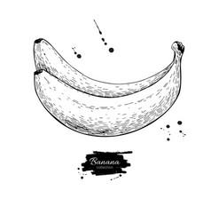 banana drawing isolated hand drawn object vector image