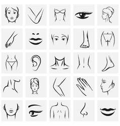 Female body parts icons vector image