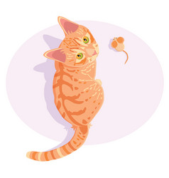 Ginger red tabcat vector