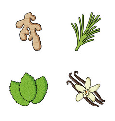 Ginger rosemary vanilla mintherbs and spices vector