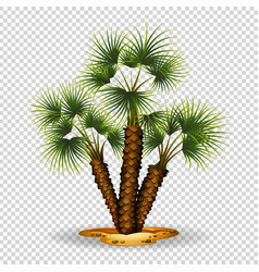 gardening theme wtih palm tree vector image