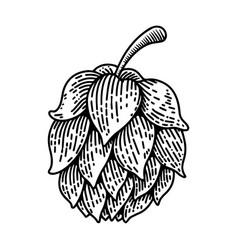 beer hop on white background design element for vector image