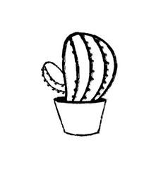 figure botanic cactus plant of the desert nature vector image