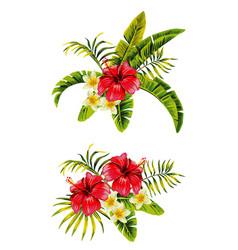 hibiscus plumeria bunches vector image