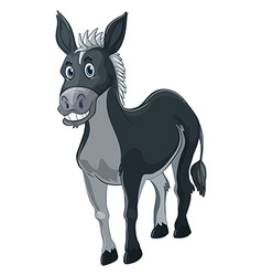 Donkey with gray fur vector