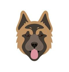 muzzle of american akita dog vector image