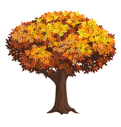 realistic isolated autumn tree vector image