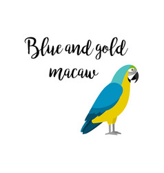 blue and gold macaw parrot bird vector image vector image