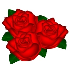 bouquet of red roses on a white background vector image vector image