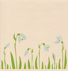 snowdrops on paper background vector image