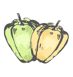 Green and orange sweet peppers isolated sketch vector