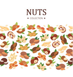 nuts collection poster flat cartoon banner vector image