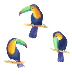 Watercolor with toucans vector image vector image