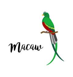 exotic tropical macaw bird vector image