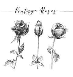 hand drawn romantic roses vector image