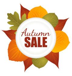 Autumn sale icon vector