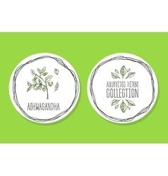 Ayurvedic Herb - Product Label with Ashwagandha vector