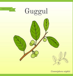 Best ayurvedic plant guggul vector