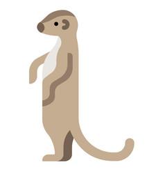 Meerkat flat vector