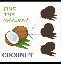 find the correct shadow nuts vector image