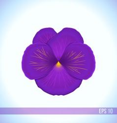 Head of violet viola flower vector
