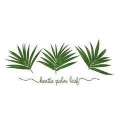 leaves howea forsteriana elements set botany vector image