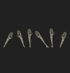 bone hands on black background human arms vector image
