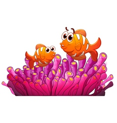 Clownfish and sea anemone vector