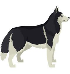 Dogs siberian husky vector
