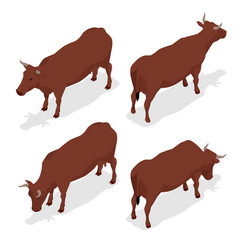 Isometric dairy cattle set cows collection vector