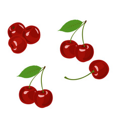 cherry cherry collection on vector image