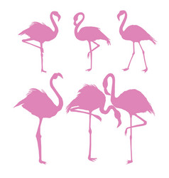 File of flamingo vector