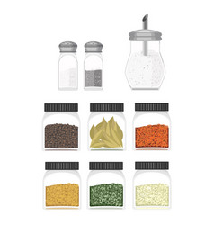 ilustration of different type spices vector image