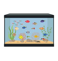 Rectangular aquarium with colorful fish vector