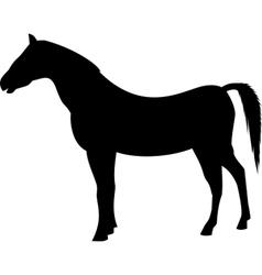 horse black silhouette vector image