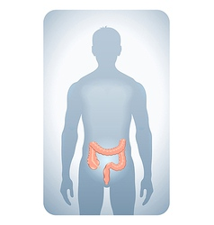 colon highlighted vector image vector image