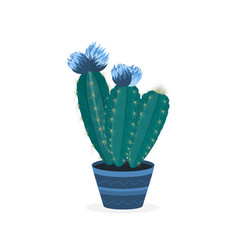 blooming cacti flowering cactus in a pot potted vector image