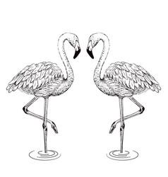 Flamingo sketch vector