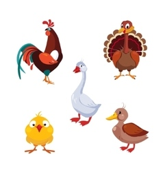 Poultry Domestic Birds Set vector image vector image