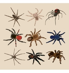 spiders set vector image