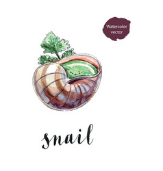 Cooked snail with leaf of parsley vector