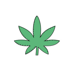 marijuana plant with leaves and medical herb vector image